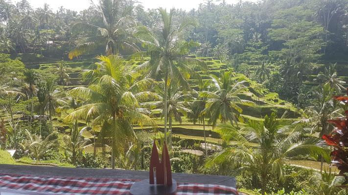 Indonesien, Bali: Telagalang Rice Terrace. Ein Ort zum träumen, wandern und chillen in der Nähe von Ubud, dem spirituellen Zentrum Balis. Die Terrassen sind begehbar, und überall gibt es (etwas teurere) Restaurants. (Nina)