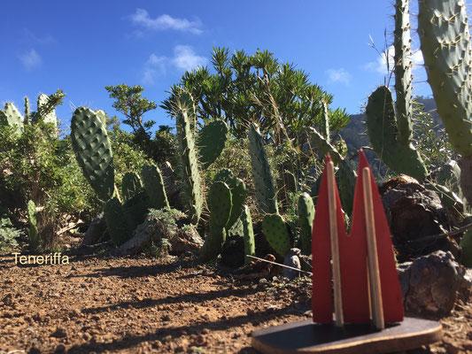 Teneriffa, Wanderung im Nordwesten, von Punta del Hidalgo aus in die Berge. Interessantes Stück geht am Barranco Secco entlang: Ein alter Wasserkanal, der teils durch den Berg geht. Stirnlampe empfohlen. (JoSi)