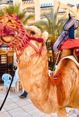 Tunesien, Zarzis. Ein Geschenk der Heiligen drei Könige! (Ilona)