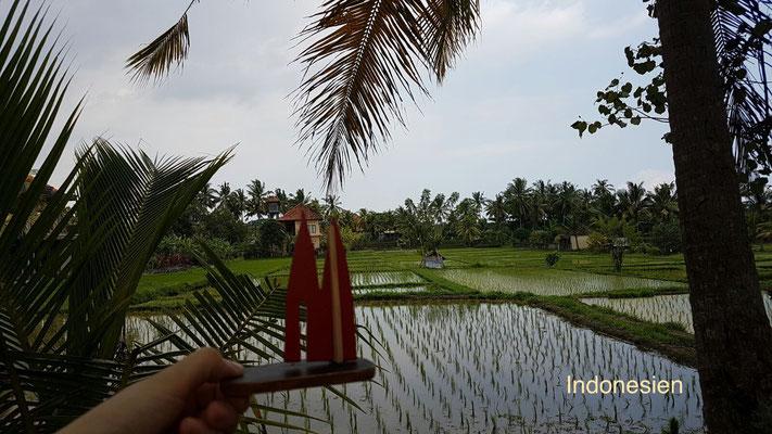 """Indonesien, Bali: Reisfelder """"irgendwo im Nirgendwo"""" (Nina)"""