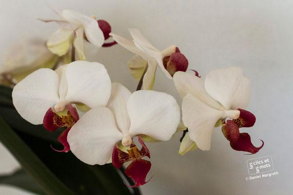 9 mai 2015. Orchidées.