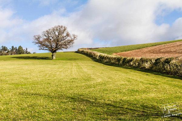 20 février 2014. Kenn. Devon. Angleterre.