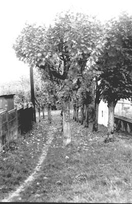 Ancienne rue aux chevaux