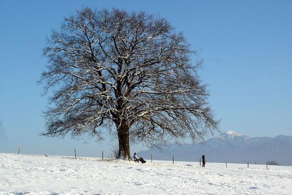 Winterbaum (Sony HX5V)