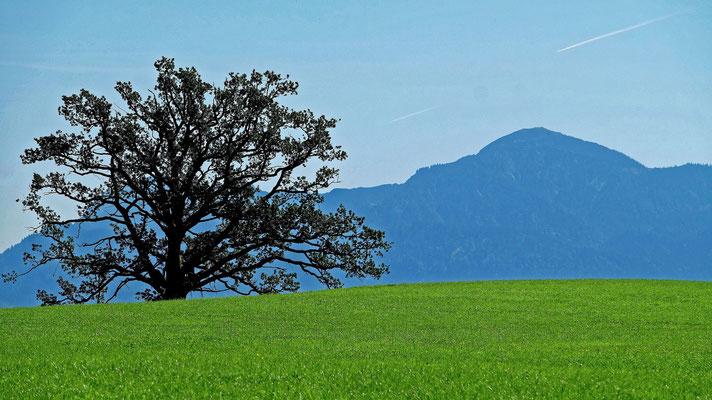 Oberbayerische Landschaft mit Baum (Fuji X-T1)