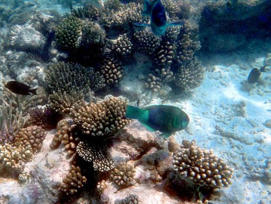 Korallen sorgen für ein Unterwasserbiotop