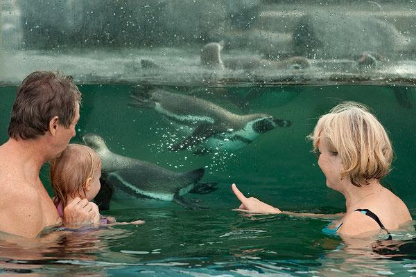Spreewelten Bad - Schwimmen mit Pinguinen