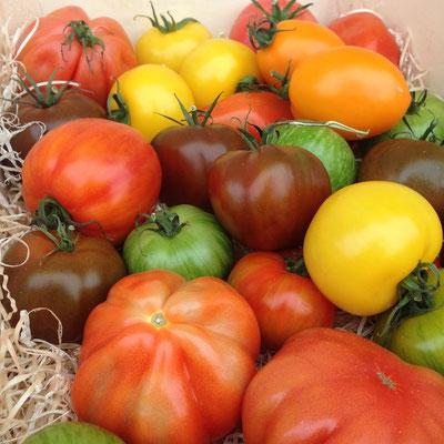 Mixte tomates d'antan