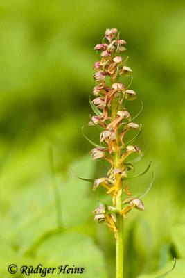 Dactylorhiza viridis (Grüne Hohlzunge), 18.5.2012