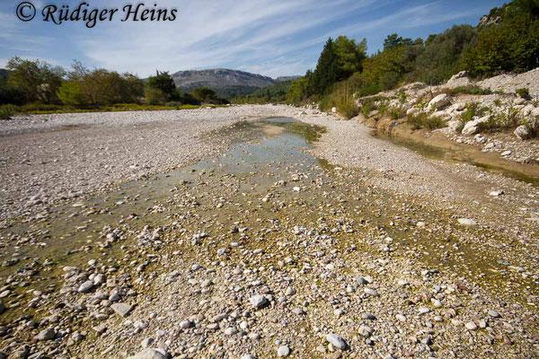 Trithemis arteriosa (Rotader-Sonnenzeiger) Habitat auf der Insel Rhodos, 27.10.2015