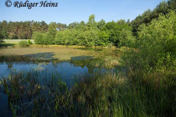 Coenagrion hastulatum (Speer-Azurjungfer) Fortpflanzungsgewässer, 31.5.2018