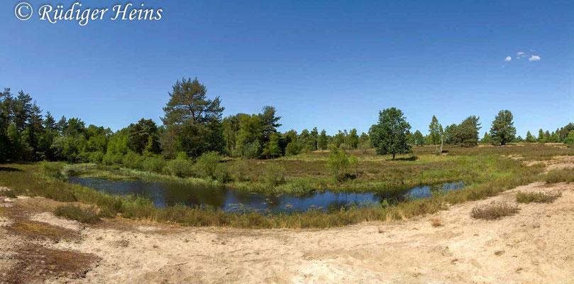 Lestes virens (Kleine Binsenjungfer) Habitat, 1.7.2018 (Panorama aus fünf Einzelaufnahmen)
