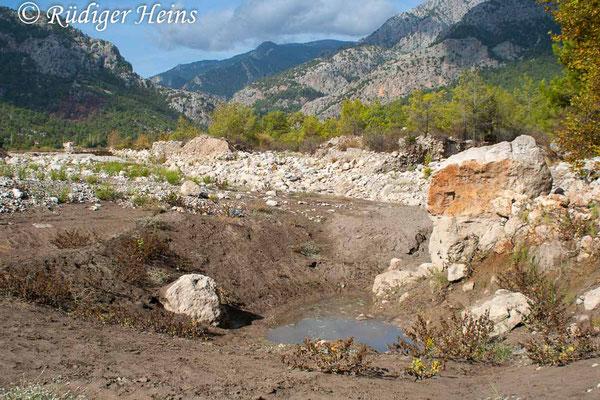 Orthetrum chrysostigma (Rahmstreif-Blaupfeil) Habitat in der Türkei, 24.10.2007