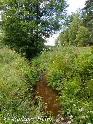 Cordulegaster boltonii (Zweigestreifte Quelljungfer) Fortpflanzungsgewässer, 17.7.2017