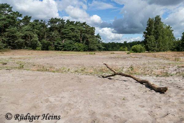 Philonicus albiceps (Sand-Raubfliege) Habitat, 21.7.2020