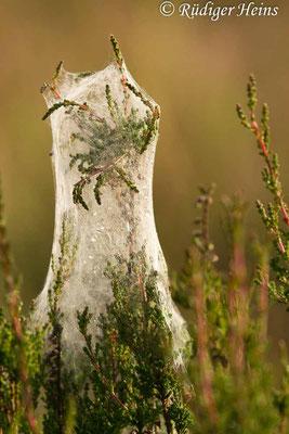 Calluna vulgaris (Besenheide), 28.6.2020