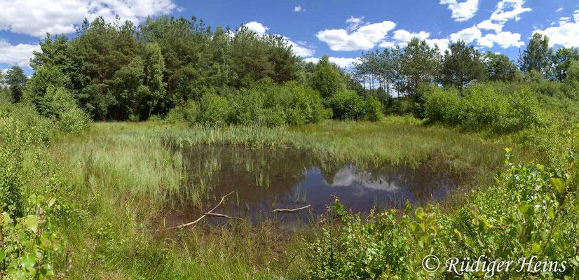 Orthetrum coerulescens (Kleiner Blaupfeil) Fortpflanzungsgewässer, 30.6.2018 (Panorama aus vier Fotos)