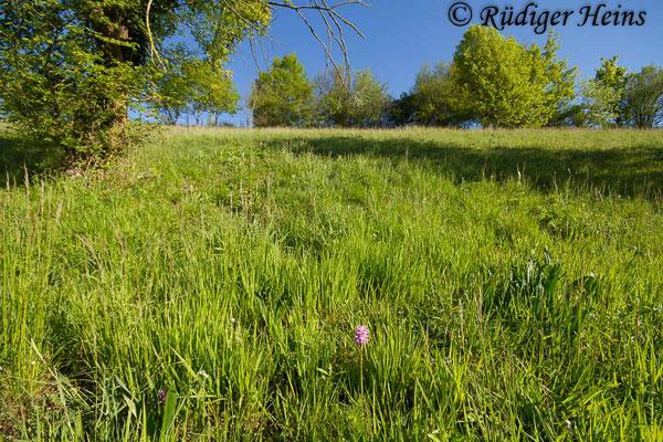 Lebensraum von Orchis simia (Affen-Knabenkraut), 6.5.2016