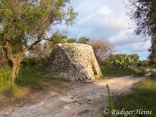 Podarcis sicula (Ruineneidechse) Lebensraum Trullo, 24.9.2019
