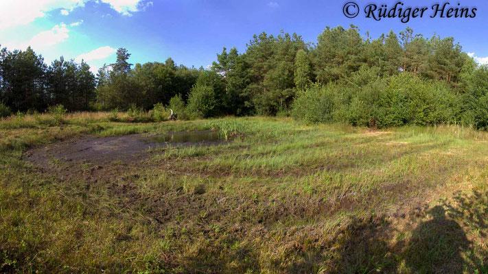 Sympetrum flaveolum (Gefleckte Heidelibelle) Habitat, 7.8.2018 (Panorama aus vier Fotos)