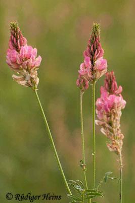 Onobrychis viciifolia (Saat-Esparsette), 16.6.2012