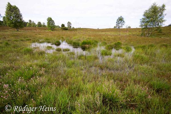 Sympetrum danae (Schwarze Heidelibelle) Habitat in Niedersachsen, 13.7.2017