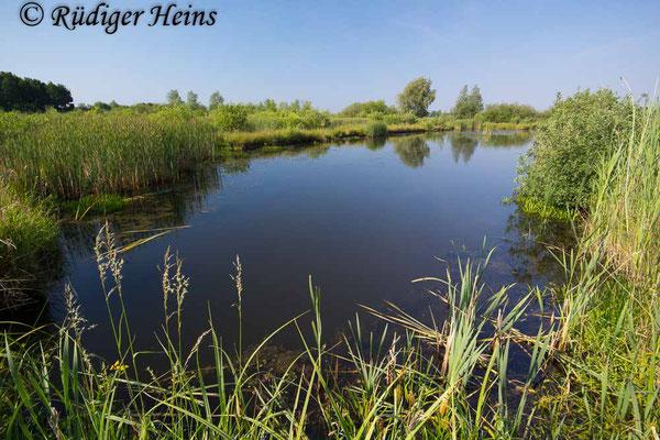 Aeshna isoceles (Keilfleck-Mosaikjungfer) Fortpflanzungsgewässer, 29.5.2018