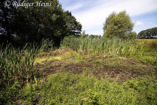 Aeshna affinis (Südliche Mosaikjungfer) Fortpflanzungsgewässer im Landkreis Harburg, 30.7.2021