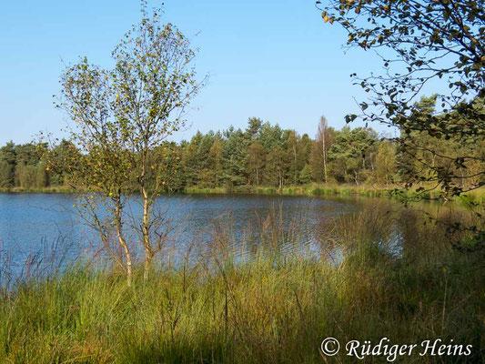 Enallagma cyathigerum (Gemeine Becherjungfer) Fortpflanzungsgewässer, 29.8.2017