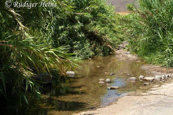 Trithemis kyrbii (Gefleckter Sonnenzeiger) Habitat in Südspanien, 16.7.2011