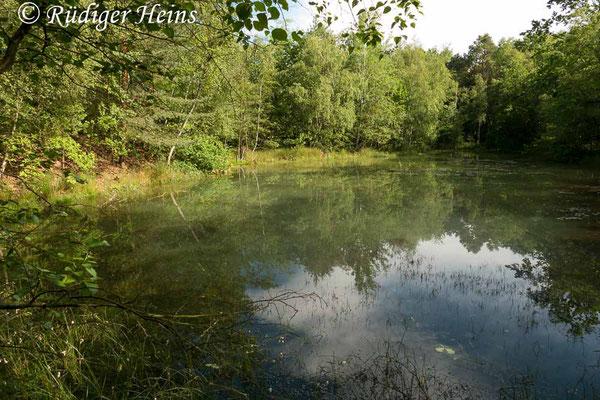 Coenagrion hastulatum (Speer-Azurjungfer) Fortpflanzungsgewässer, 13.6.2019