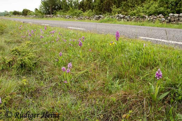 Orchis militaris (Helm-Knabenkraut) Habitat, 4.6.2014