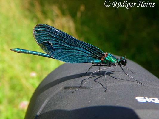 Calopteryx virgo (Blauflügel-Prachtlibelle), Männchen 25.7.2010