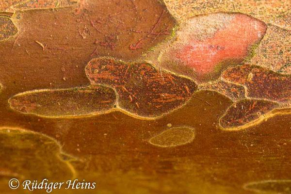 Europäische Eibe (Taxus baccata), 26.3.2021 - Makroobjektiv 100mm f/2,8