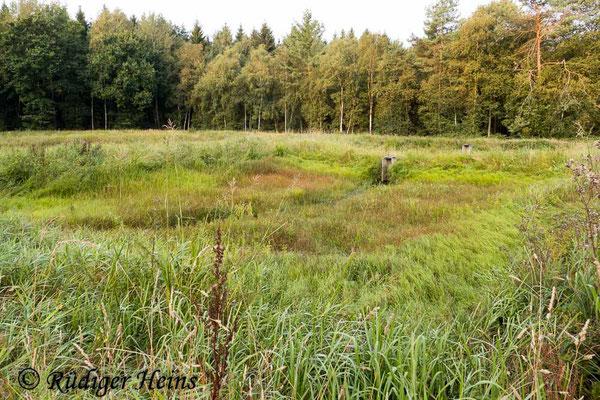 Sympetrum depressiusculum (Sumpf-Heidelibelle) Habitat, 28.8.2019