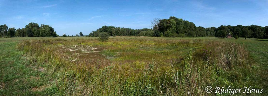 Sympetrum flaveolum (Gefleckte Heidelibelle) Habitat, 29.8.2018 (Panorama aus fünf Aufnahmen)