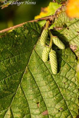 Corylus avellana (Gemeine Haselnuss), 15.10.2019