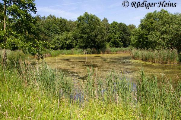 Crocothemis erythraea (Feuerlibelle) Habitat in Niedersachsen, 15.6.2017