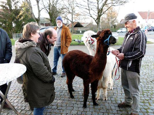 Der Gärtner Fritz mit den beiden Lamas von Steffi und Klaus