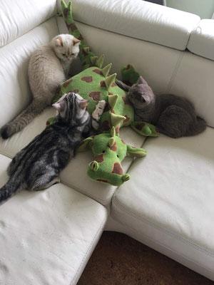 Sie lieben ihren Drachi