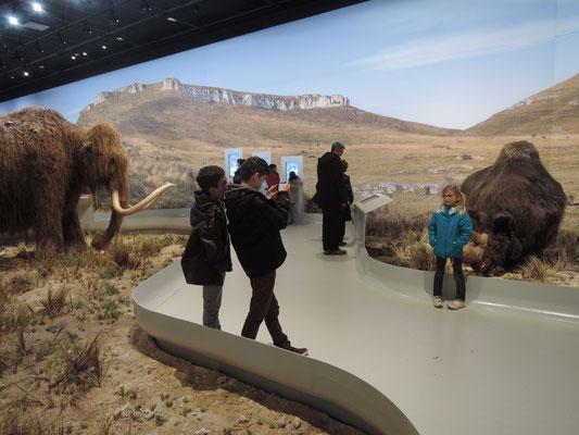 grotte Chauvet, Pont d'Arc, espace aurignacien, reproduction de la faune en taille réelle