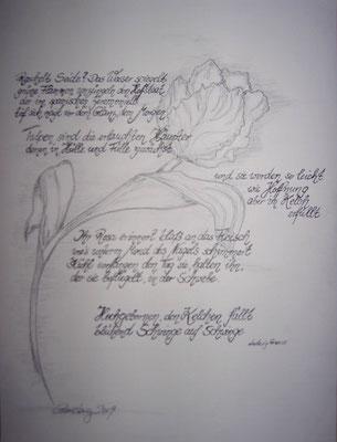 Greeves Tulpe, 40*50 cm, Bleistift und Faserstift auf Karton, inkl. Passepartout, datiert, signiert, Unikat, 150 €