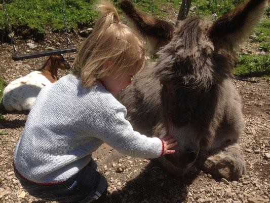 """Der Esel """"Frederiko"""" auf der Brunnsteinhütte"""