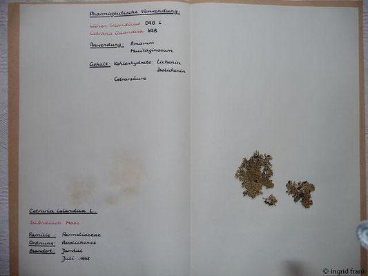 (149) Cetraria islandica - Isländisch Moos