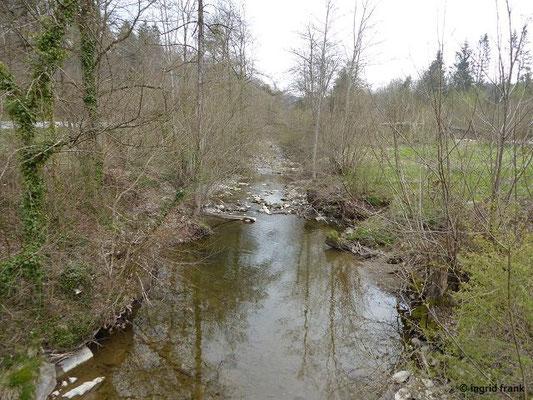 Wolfegger Ach mit Niedrigwasser flussaufwärts