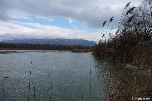 Im Mündungsbereich der Bregenzerach