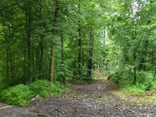 Rückeweg im Stadtwald Weingarten