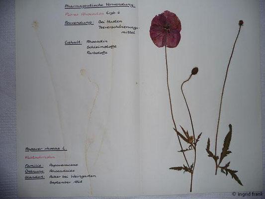 (45) Papaver rhoeas - Klatsch-Mohn