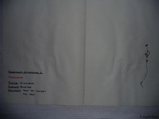 (81) Vaccinium oxycoccus - Moosbeere