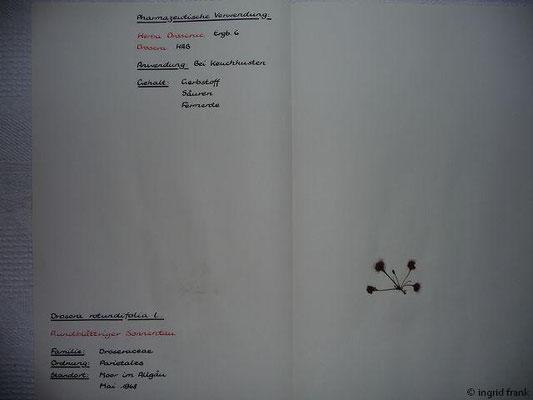 (50) Drosera rotundifolia - Rundblättriger Sonnentau